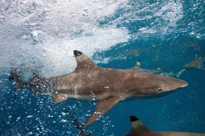 Есть ли акулы в Дубае, ОАЭ, эмиратах, Персидском заливе